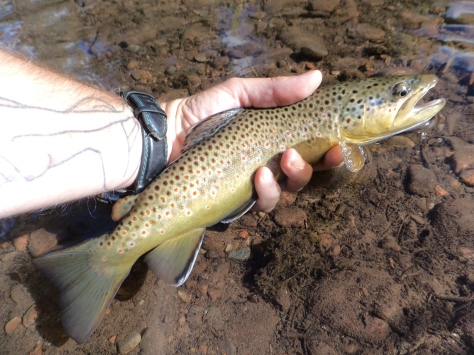 40cm-oring-gore-creek
