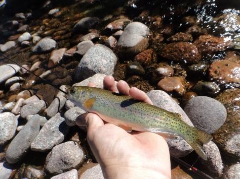 regnbage-gore-creek